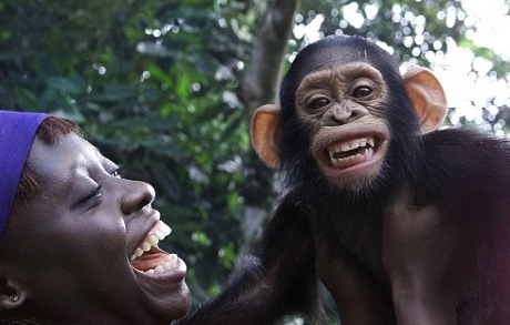chimp happy
