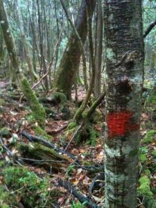 Aokigahara Blood