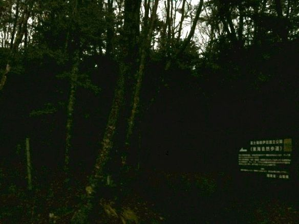 Aokigahara Entrance Night