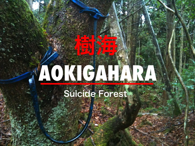 http://endofthegame.files.wordpress.com/2012/02/aokigahara-suicide-forest.jpg
