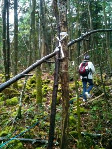 Aokigahara Stick Project