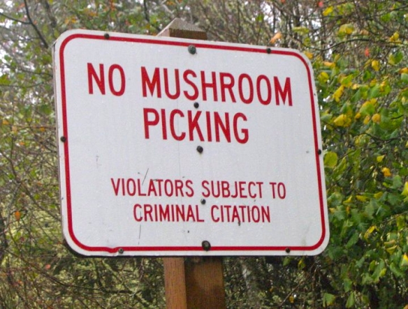 mushrooms illegal