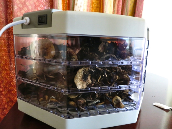 food dehydrator magic mushrooms